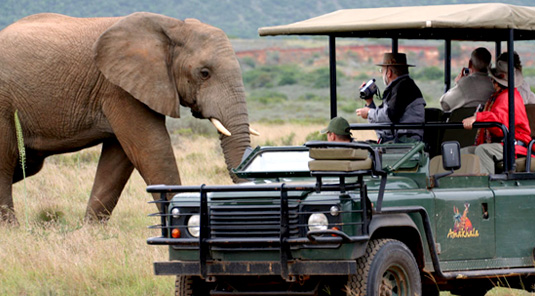 Amakhala Game Reserve Eastern Cape South Africa